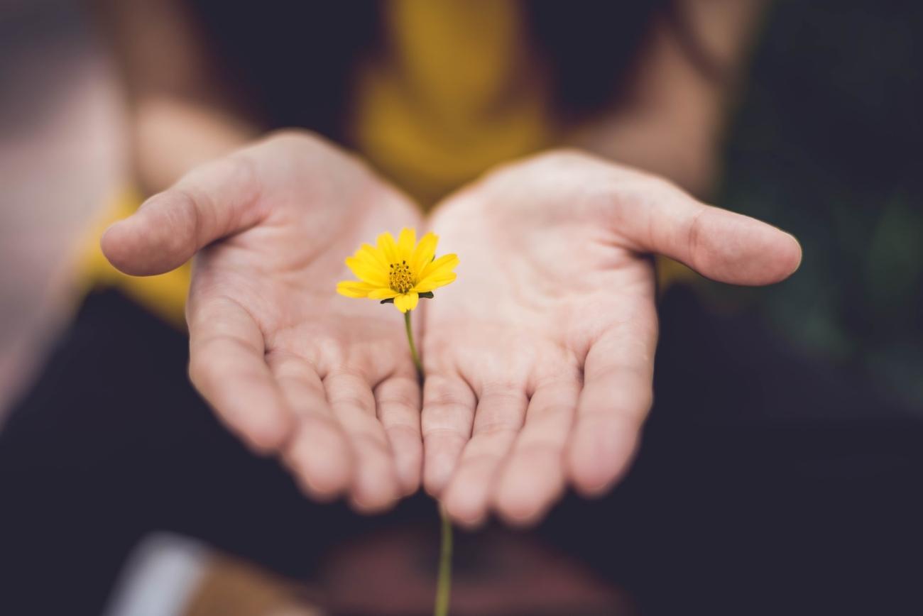 Zwei Frauenhände umfassen gelber Blume.