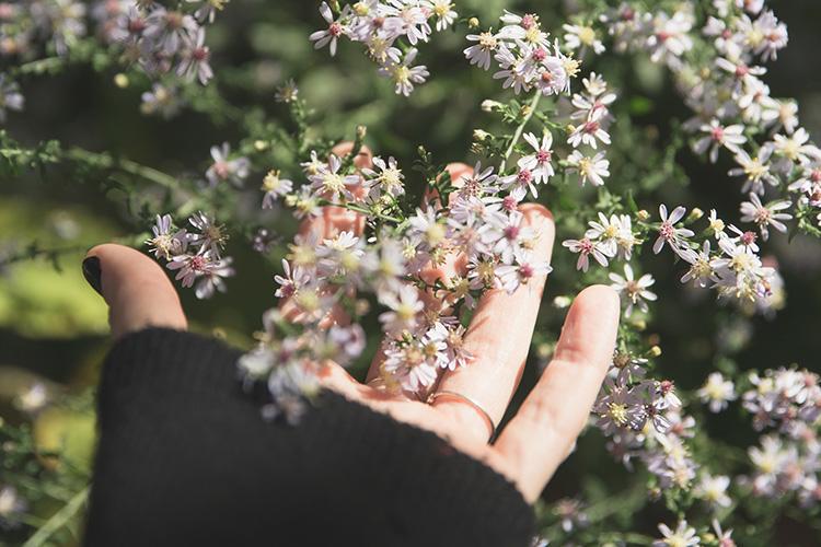 Hand die Pflanze berührt