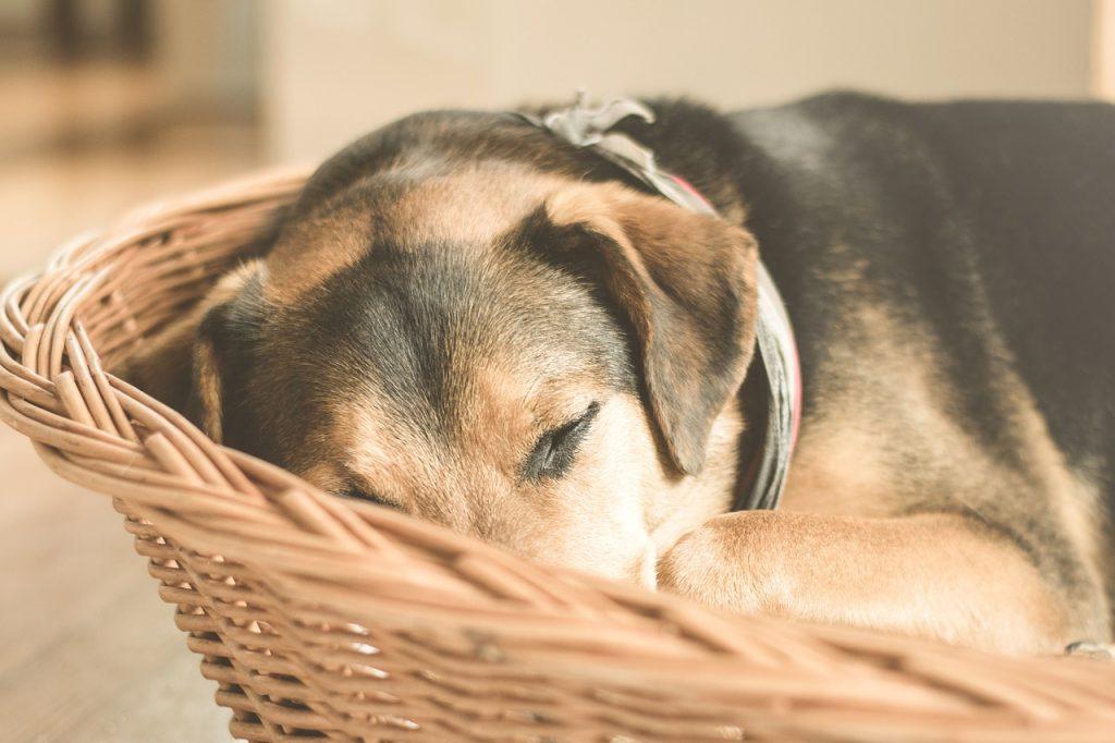 Hund schläft im Korb
