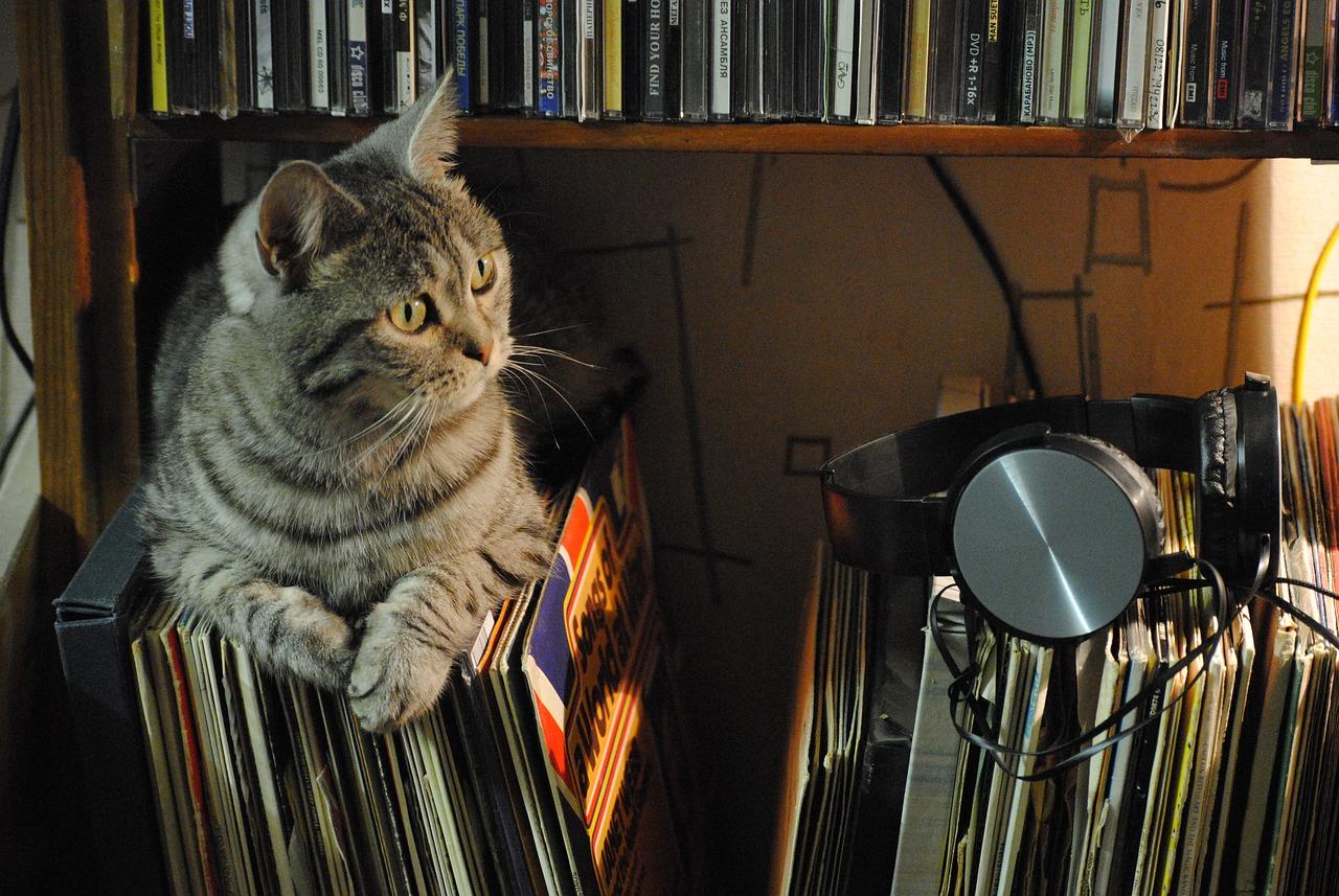 Katze sitzt auf Schallplatten in einem Regal